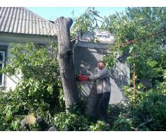 спиливание, опиливание, деревьев. вывоз мусора