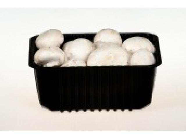 Лотки и ящики для упаковки грибов и ягод оптом.