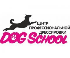 Дрессировка собак и зоогостиница в