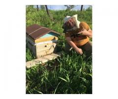 Продам Отличный мед тел. 8 950 273 7961 Кемерово